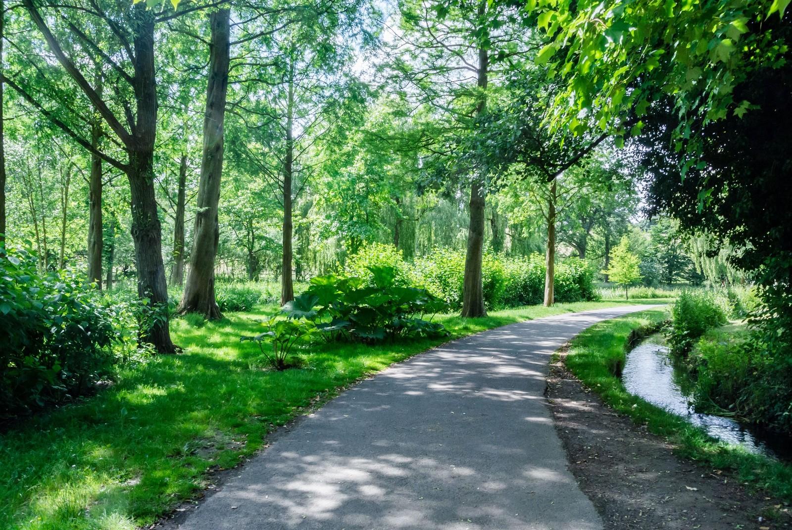 緑が多い森